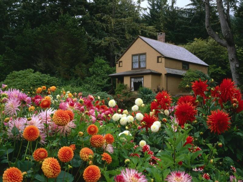Пазл Собирать пазлы онлайн - Цветы у дома