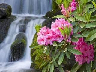 Собирать пазл Цветы у водопада онлайн