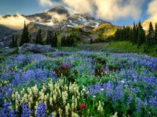 Собирать пазл Цветы в горах онлайн