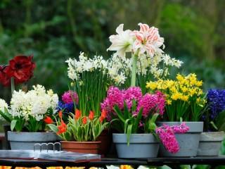 Собирать пазл Цветы в горшках онлайн