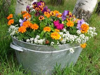 Собирать пазл Цветы в корыте онлайн