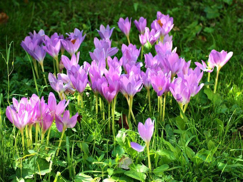 Пазл Собирать пазлы онлайн - Цветики