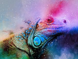Собирать пазл Цветная рептилия онлайн
