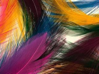 Собирать пазл Цветные перья онлайн