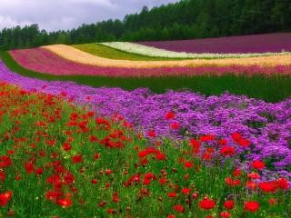Собирать пазл Цветные просторы онлайн