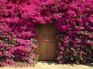 Собирать пазл Цветочная арка онлайн