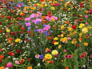 Собирать пазл Цветочная клумба онлайн