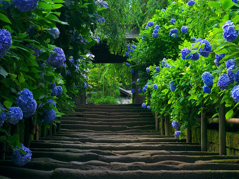 Пазл Собирать пазлы онлайн - Цветочная лестница