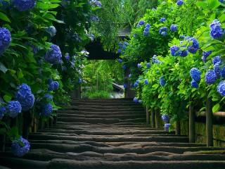 Собирать пазл Цветочная лестница онлайн