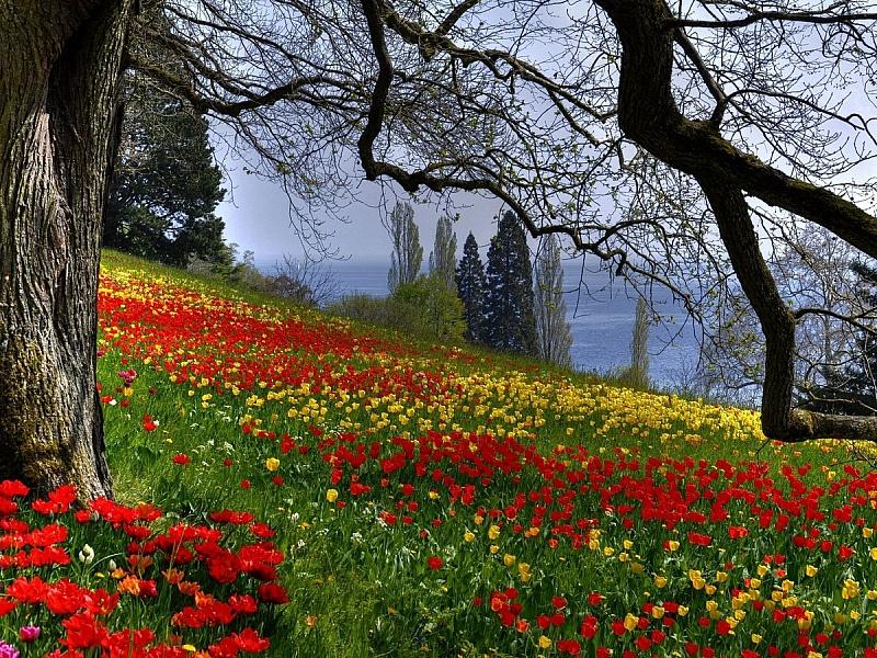Пазл Собирать пазлы онлайн - Цветочная поляна