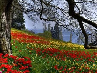 Собирать пазл Цветочная поляна онлайн