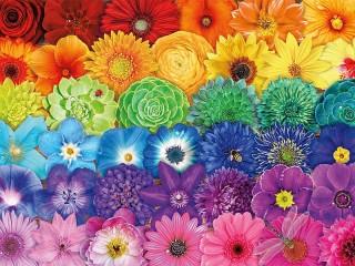 Собирать пазл Цветочная радуга онлайн