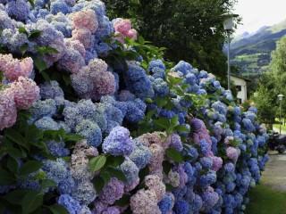 Собирать пазл Цветочная стена онлайн