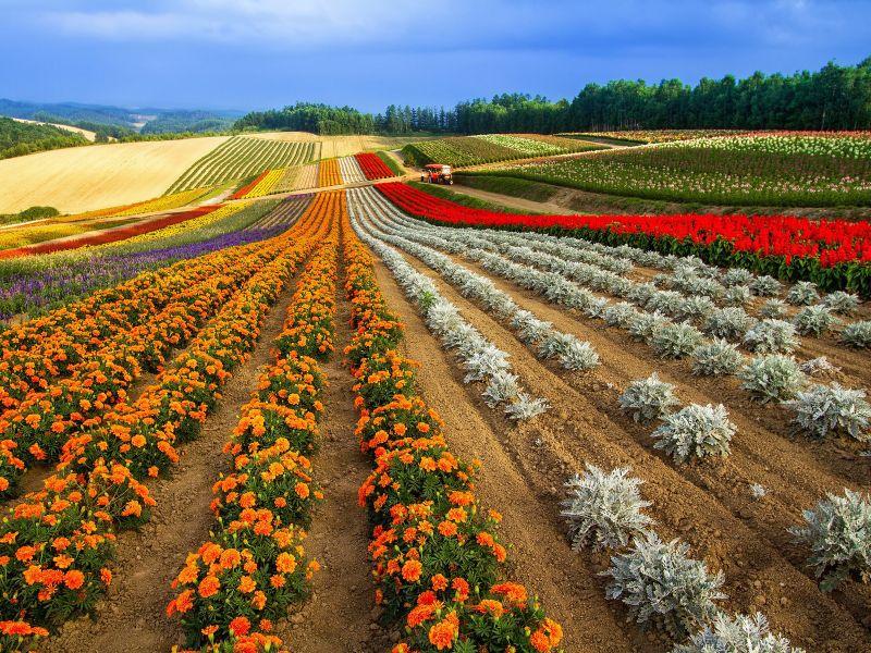 Пазл Собирать пазлы онлайн - Цветочные холмы
