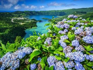 Собирать пазл Цветочный пейзаж онлайн
