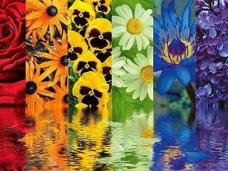 Собирать пазл Цветочный релакс онлайн