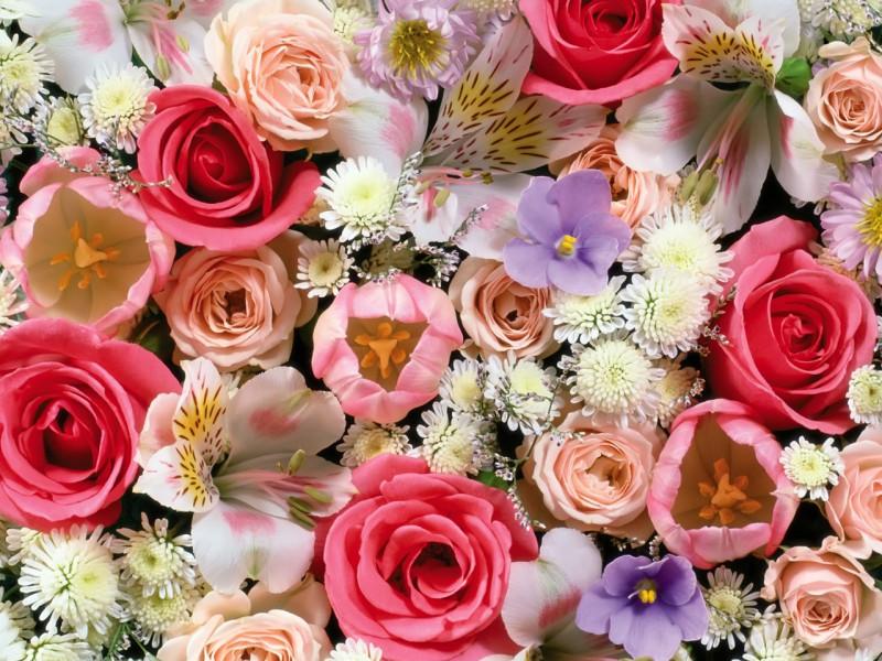 Пазл Собирать пазлы онлайн - Цветочный бум