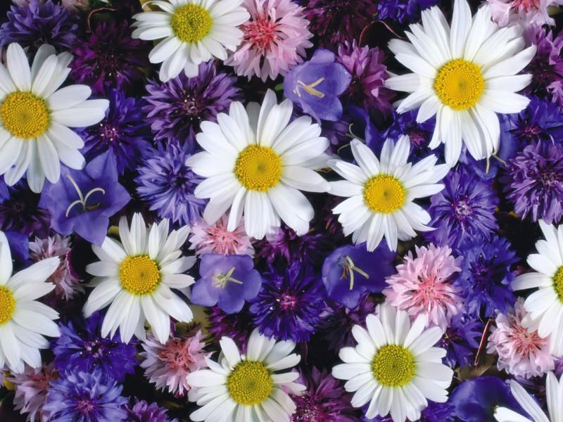 Пазл Собирать пазлы онлайн - Цветочный ковер