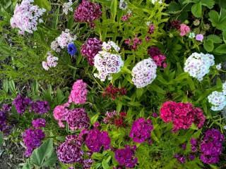 Собирать пазл Цветочный микс онлайн