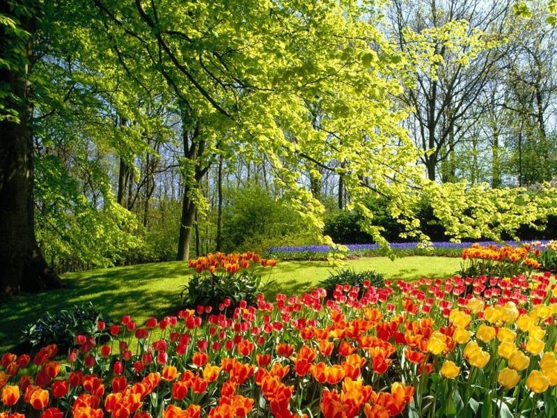 Пазл Собирать пазлы онлайн - Цветочный сад