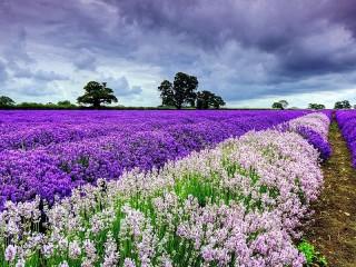 Собирать пазл Цветочное поле онлайн
