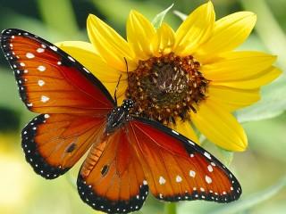Собирать пазл Цветок и бабочка онлайн