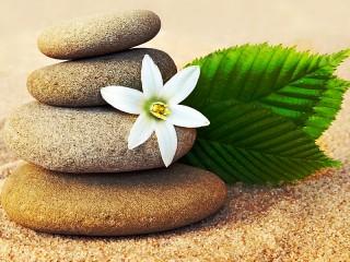 Собирать пазл Цветок и камни онлайн
