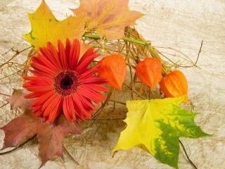 Собирать пазл Цветок и листья онлайн