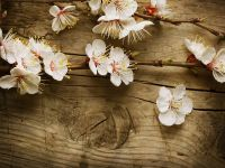 Собирать пазл Цветущая вишня онлайн