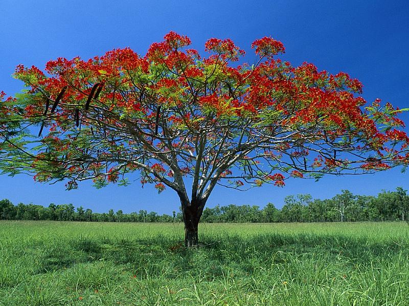 Пазл Собирать пазлы онлайн - Цветущее дерево