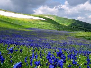 Собирать пазл Цветущий Алтай онлайн