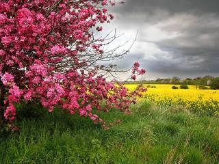 Собирать пазл Цветущий куст онлайн