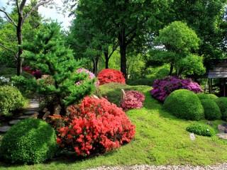 Собирать пазл Цветущий парк онлайн
