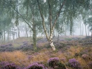 Собирать пазл Туман в лесу онлайн