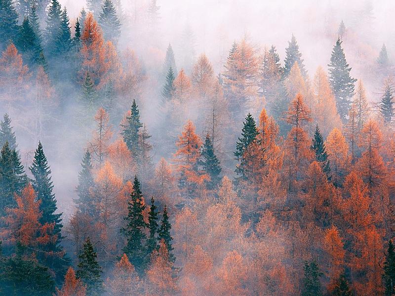 Пазл Туманный лес