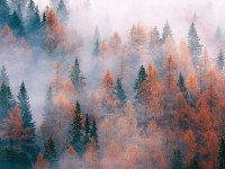 Собирать пазл Туманный лес онлайн