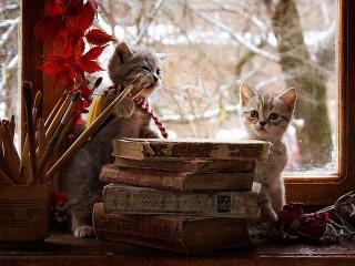 Собирать пазл Творческие котята онлайн