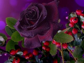 Собирать пазл Тёмная красавица онлайн