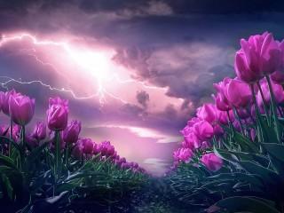 Собирать пазл Тюльпаны и гроза онлайн