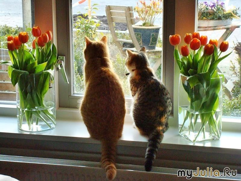 Пазл Собирать пазлы онлайн - Тюльпаны и коты