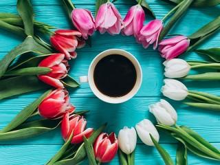 Собирать пазл Тюльпаны и напиток онлайн