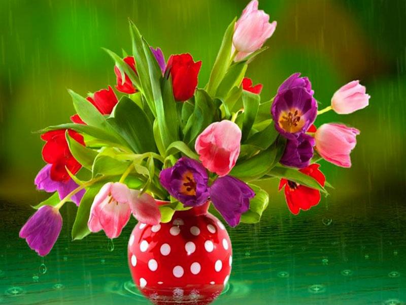 Пазл Собирать пазлы онлайн - Тюльпаны под дождём