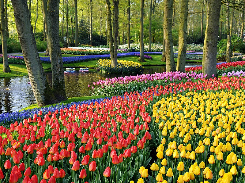 Пазл Собирать пазлы онлайн - Тюльпаны у ручья