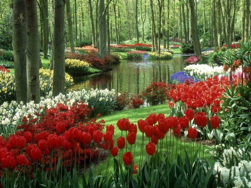 Пазл Собирать пазлы онлайн - Тюльпаны в  парке