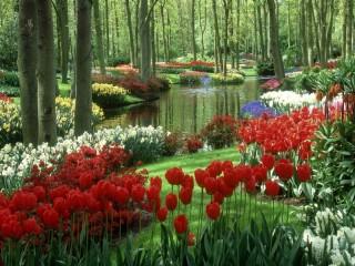 Собирать пазл Тюльпаны в  парке онлайн