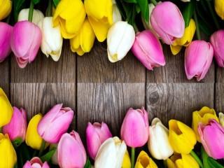 Собирать пазл Тюльпановый коллаж онлайн