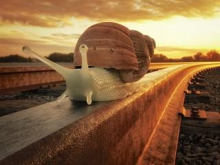 Собирать пазл Улитка путешественница онлайн