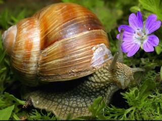 Собирать пазл Улитка и цветок онлайн