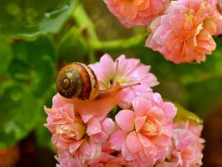 Собирать пазл Улитка на цветах онлайн