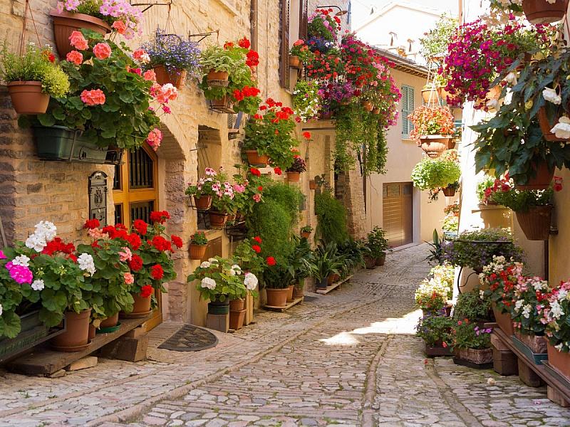 Пазл Собирать пазлы онлайн - Улица в цветах